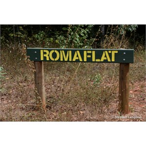 Roma Flat Track Junction