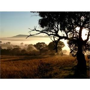 Morning light, Wallaroo NSW