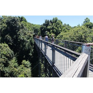 The Sky Walk is high above the forest