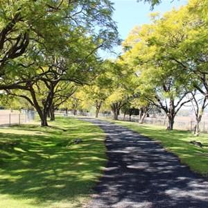 The Jacaranda lined driveway