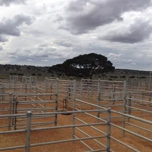 Mundrabilla Stn Livestock Yards