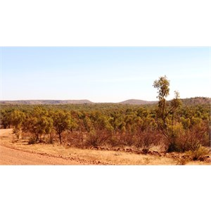 Distant Mountains from Camooweal - Gregory Downs Road