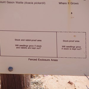 Mount Gasson Wattle Project