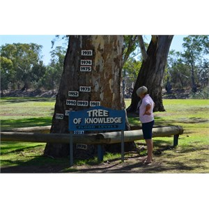 Tree of Knowledge - Loxton