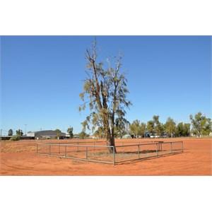 Corroboree Tree