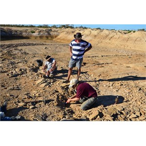 Fossil Hunting Site 1