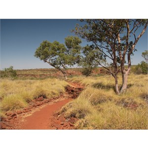 Track conditions in the spinifex