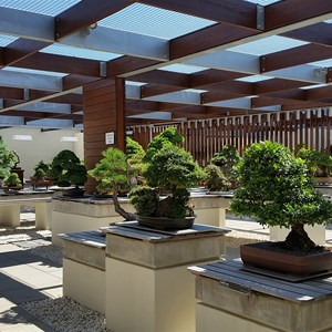 Bonsai gallery