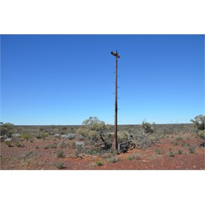 Old Communications Tower - Emu