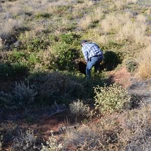 Aboriginal Native Well