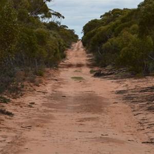 Pinkawillinie Conservation Park