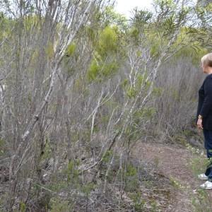 Beyeria Conservation Park Walk - Stop 1