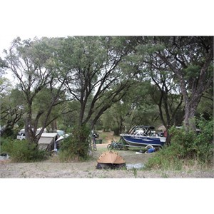 Camp sites under peppermint trees