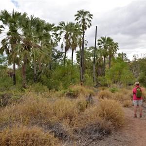 Upper Gorge Walk Track
