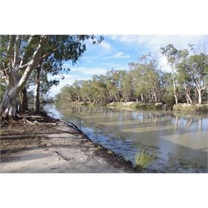 Camp Site 28 - Katarapko Creek
