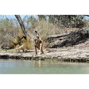 Nelbuck Creek