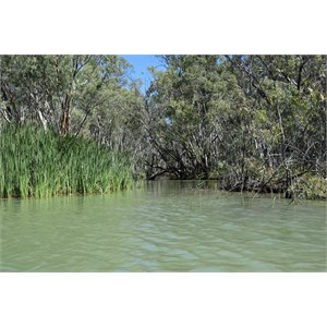 Nulbuck Creek Entrance - Murray River