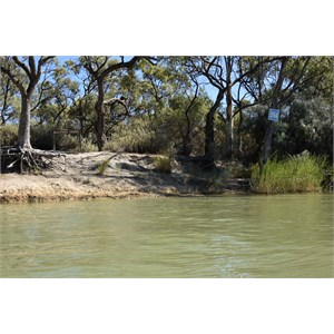 Bulyong Creek Entrance - Murray River
