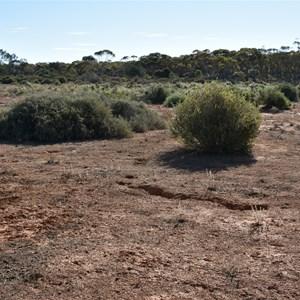 Bluebird Dam Site