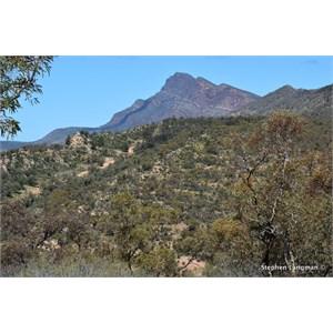 Northern Elder Range Lookout