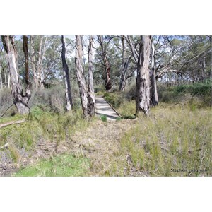 Border Cliffs Customs House Wetland Walk - Wooden Foot Bridge