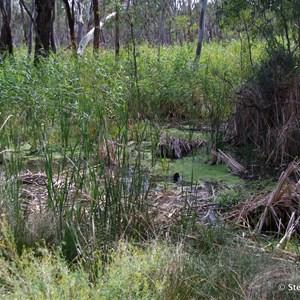 Border Cliffs Customs House Wetland Walk - Lagoon