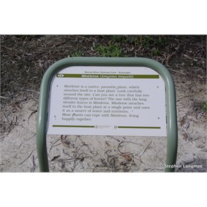 Ngak Indau Wetland Trail - Interpretive Sign - Mistletoe