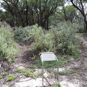 Ngak Indau Wetland Trail - Interpretive Sign - Saltbush