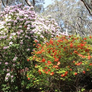 Colour among the gums