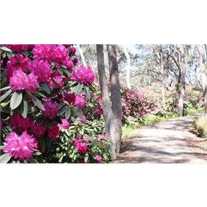 Blooms beside the path