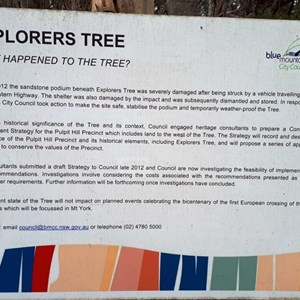 A sign explaining te condition of the tree