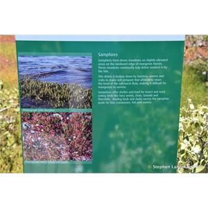 St Kilda Mangrove Trail and Interpretive Centre - Salt Meadows