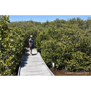 St Kilda Mangrove Trail and Interpretive Centre - Saline Forrest