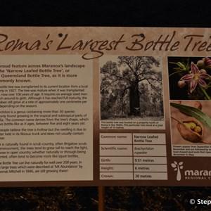 Roma's Largest Bottle Tree