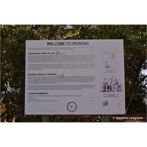 Prunung Aboriginal Scarred Trees