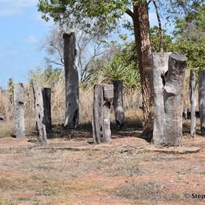 Prunung Aboriginal Scarred Trees
