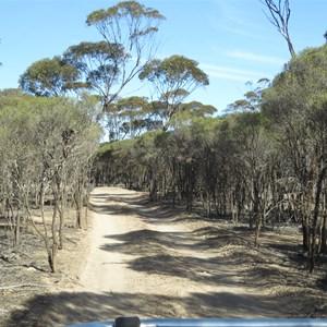 Track vegetation