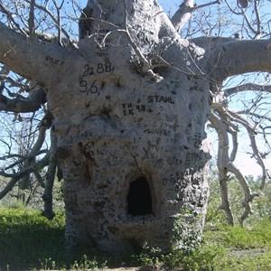 Wyndham Police Tree