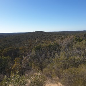 View north east from the top of the Milmed track lookout dune.