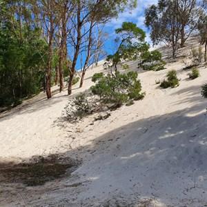 Henty Dunes Picnic Area