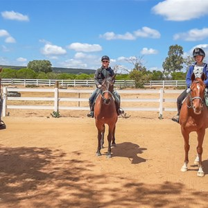 Standardbreds and Thoroughbred trail horses