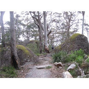 Mossy boulders in the forest