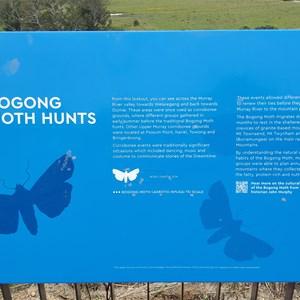 Bogong Moth storyboard.