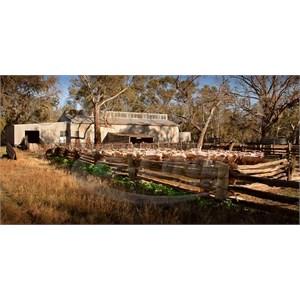 Lelma shearing shed