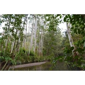 Bobin Creek Environs