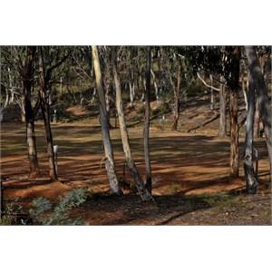 Hill End Glendora Camping Ground
