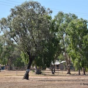 Barunga (Bamyili)