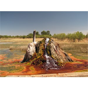 Colourful algae at the bore