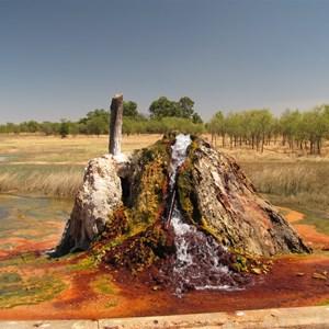 Colourful algae at the bore