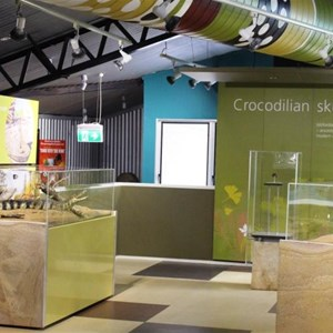 Inside of the crocodile museum